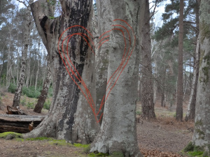 Three Line 'Tree Heart' - The parts really are painted on five trees about 10m apart.
